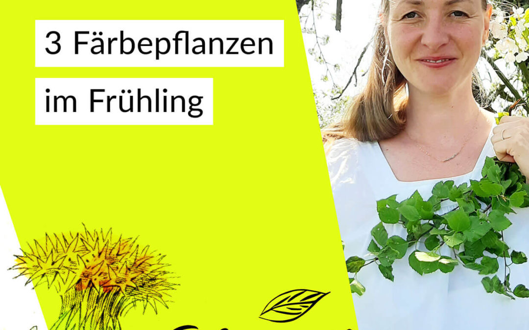 # 022 — 3 Färbepflanzen im Frühling